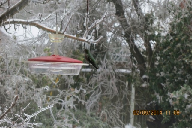 Ice storm hummer