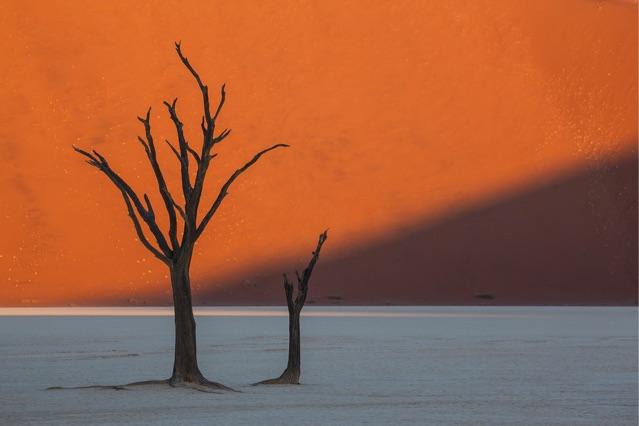 Namibia trees