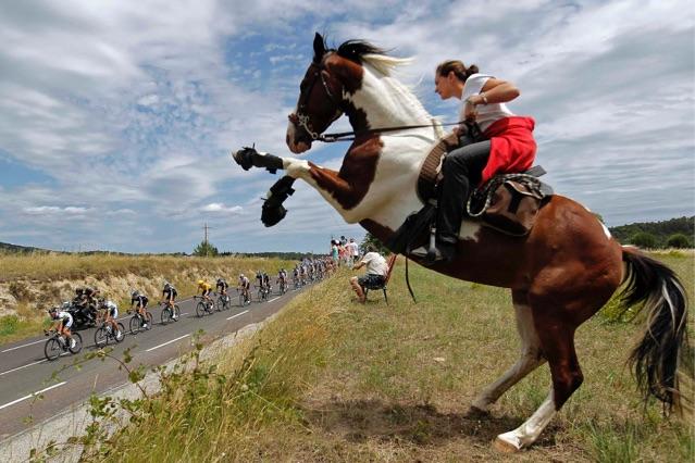 Tour de france horse