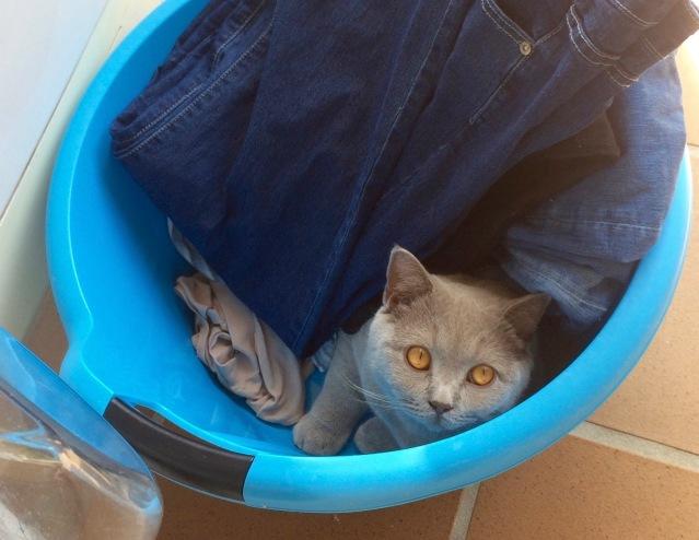 Micah laundry